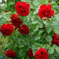 Få den perfekte blomster have